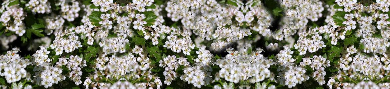 Miel de Flora Montana